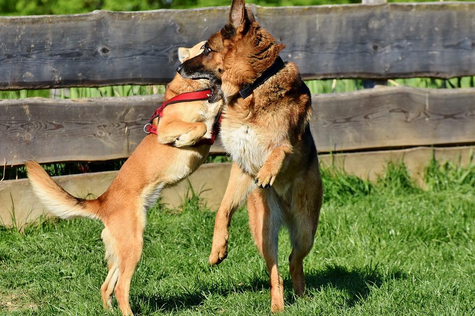 Legesyge hunde
