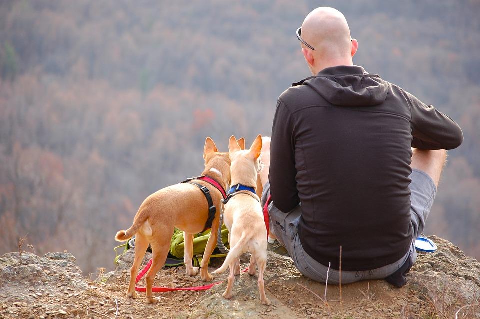 To hunde en mand