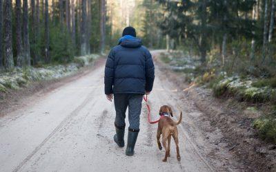 Gør hunden til en del af dine sommerplaner